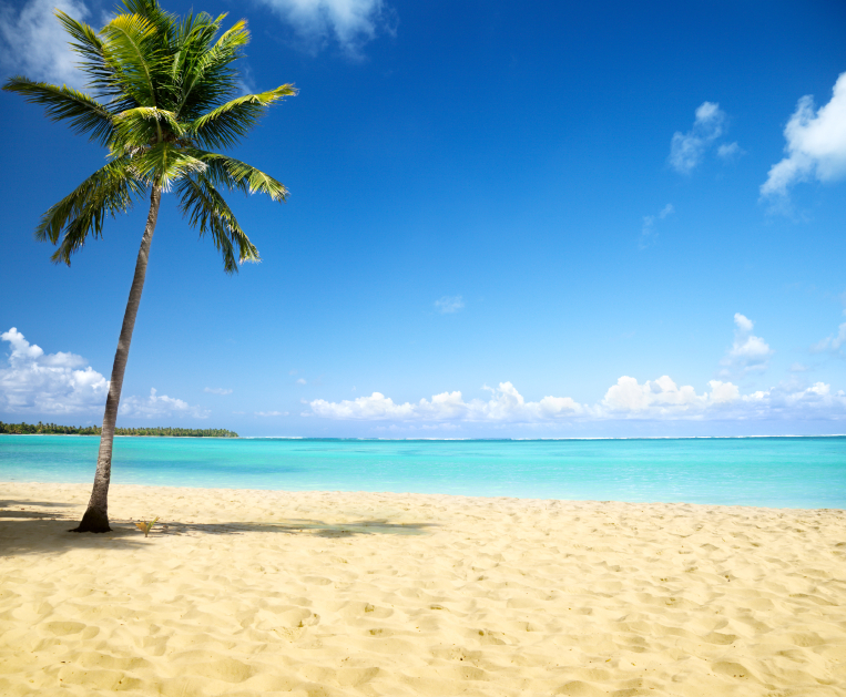 000011596958_Small_beach_palm_tree