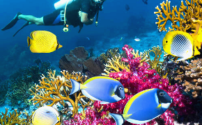belize_scuba_beach_caribbean_fish290x180