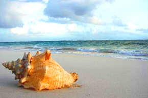 hawaii_shell_beach290x193